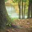 bienfaits forêt arbres